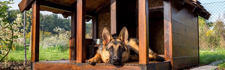 How to Choose a Kennel for Your Dog