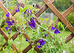 Our Basic Tips for Installing Trellis