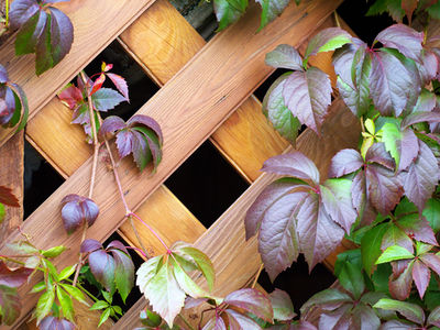 How to enhance your garden with Trellis Panels